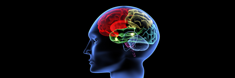 Meer nieuws over de hersenen, over ons brein